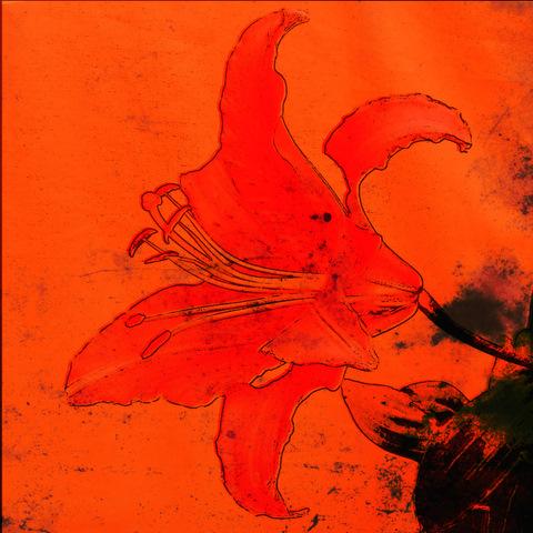 orange_lily_acid